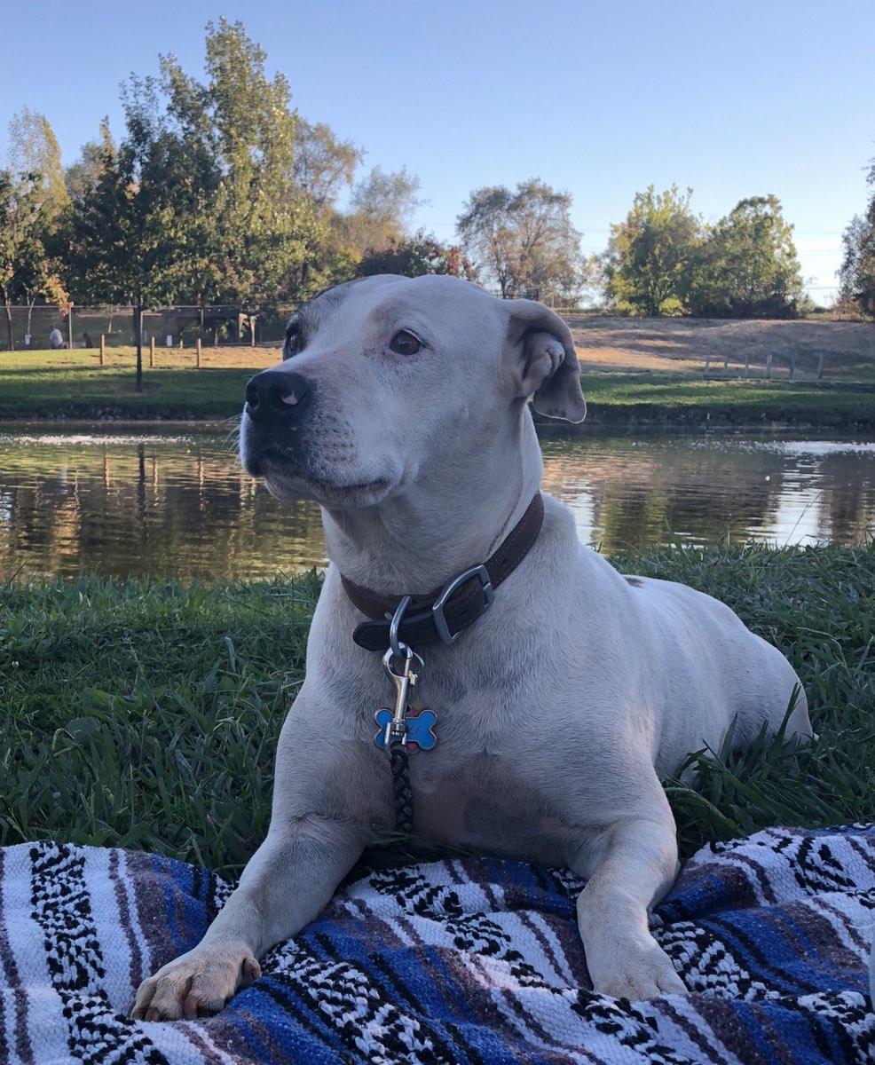 Cali Dog